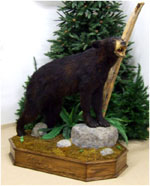 Black Bear on Oak base